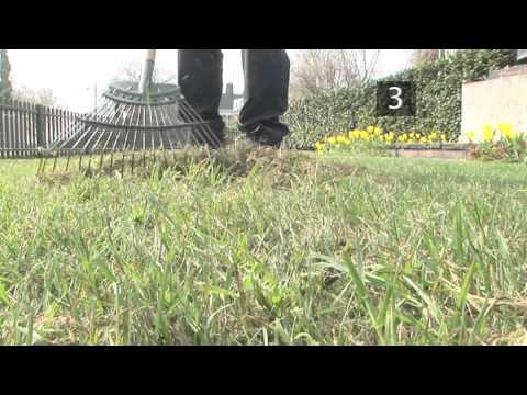 How To Care For Your Lawn In Spring – Spring Lawn Care Tips | Garden Ideas & Tips | Homebase