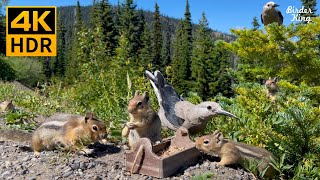 Cat and Dog TV  8Hour  4K  Chipmunks, Squirrels, Birds in the Mountains