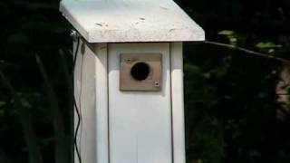 Rear Yard Carolina Chickadee Nestbox
