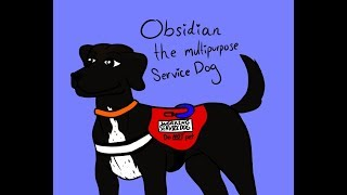 Service Dog Q&A | Update