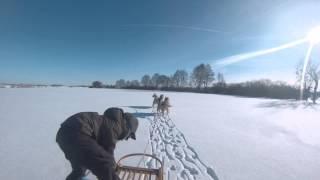 GoPro Хаски , упряжка с 4-х собак( январь 2014)