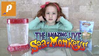 Розпакування незвичайної посилки з морськими мавпами гомункул Unboxing sea monkeys морські мавпи
