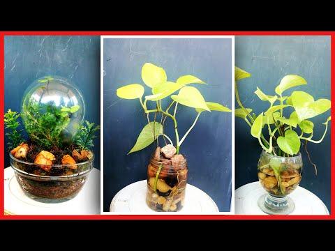 How to Make a Terrarium 💚 |How to make Terrarium #DIY ടെറേറിയം എളുപ്പത്തിൽ നിർമ്മിക്കാം | Malayalam