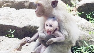 Monkey cry - Teenage monkey kidnapped baby monkey - Baby monkey cry part 1