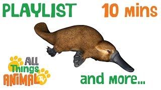 CUTE ANIMALS and more: Animal playlist for children. 10 mins. Kindergarten | Preschool learning