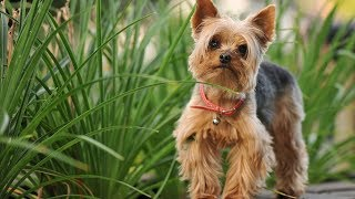 15 Dog Breeds That Don't Smell