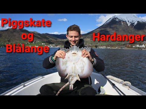 Fiske i Hardangerfjorden #2 | Mai 2015