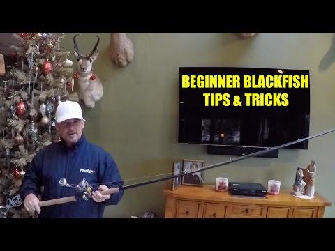 BLACKFISH - TAUTOG FOR BEGINNERS