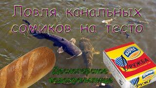Ловля канальных сомиков на тесто