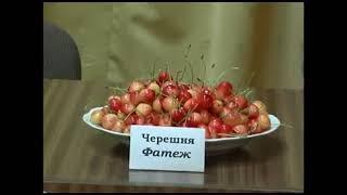 видео Лучшие саженцы в РФ