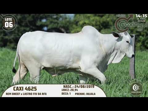 LOTE 06   CAXI 4625
