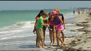 Curious Kids - Beaches