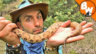 How Deadly is the Copperhead?!
