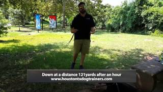 Lovie Basic Lesson Package 'down' Command - Off Leash K9 Training Houston