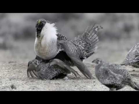 Wild North America - National Geographic Documentary