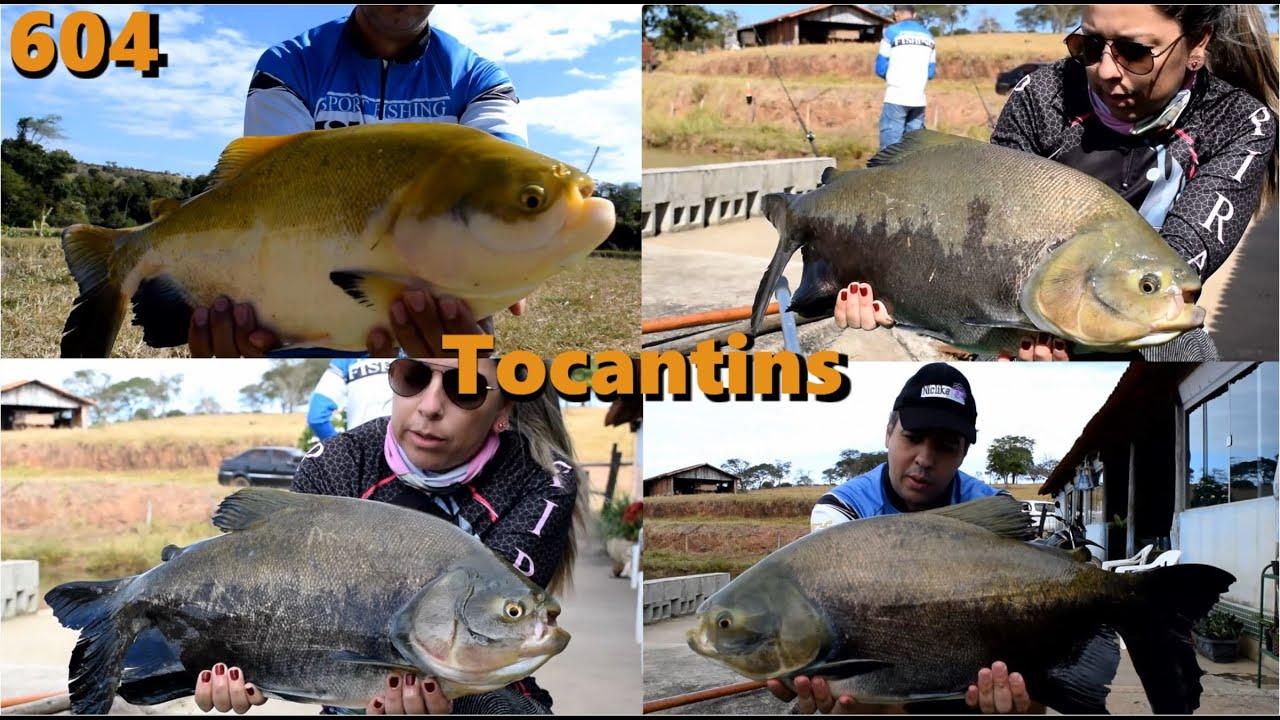 Inverno no Pesque Pague Tocantins em Morrinhos interior de Goiás - Fishingtur 604 Pesca e Pescaria