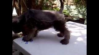 My Baby Victoria......-2012-02-29