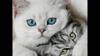 Мама кошка :-P