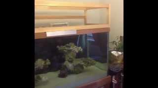120 Gallon Build Pt11 Diy Aquarium Canopy 1