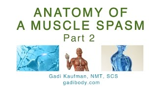 Anatomy of a Muscle Spasm