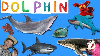 Learning 7 Real Sea Creatures | First Words Song #14 DOLPHIN | Matt Vs Crab Learn English Kids