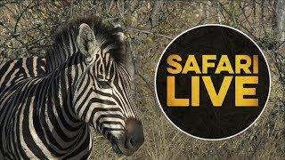 safariLIVE - Sunset Safari - July 12, 2018