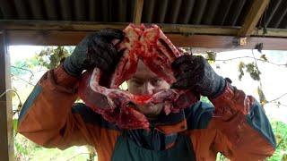 сом 72 кг  Разбираем на составные части (cutting catfish cook)