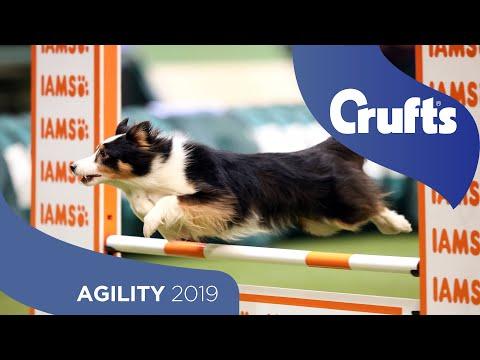 Agility - Crufts Singles Heat - Medium (Jumping) | Crufts 2019