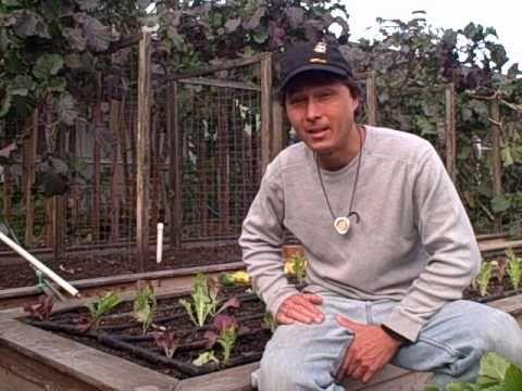 Planting A Vegetable Garden For Winter In Northern California Vegetable Gardening Videos