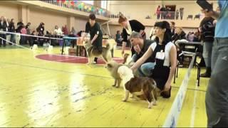 Выставка собак в г.Тула (06.03.2016).