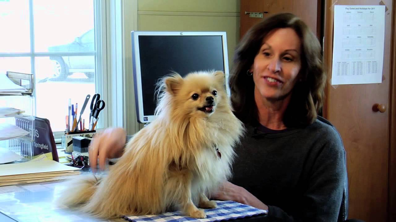 Hollywood S Most Pampered Dogs Youtube