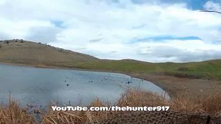 Hirfanlı Ördek Avı ( Macar Ağırlıklı ) 2015