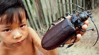 THE LARGEST INSECTS IN THE WORLD