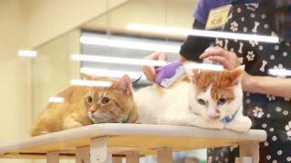 助けて〜……。初めてのトリマーに緊張ガチガチの猫たち