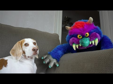 Dog & Monster Become Best Friends: Cute Dog Maymo