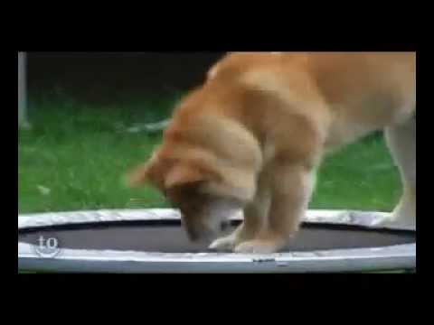 Funny Animals Jumping On Trampolines Funny Video