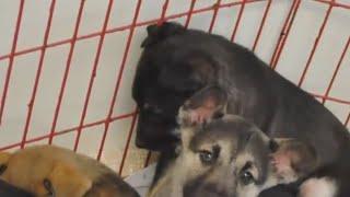 Мужчина подарил жене щенка, спустя несколько лет пёс доказал свою преданность