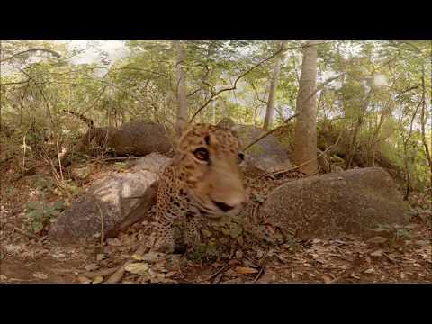 Дикие животные в Virtual Reality 360° 4K VR 3D видео для очков виртуальной реальности 360 TB