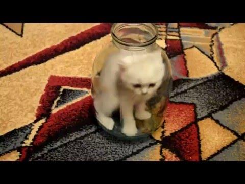 cat in the jar reload - 瓶内の猫 -  القط في جرة