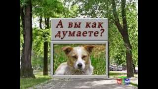 Диалог о животных - 25.03.2013