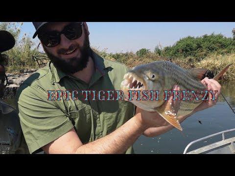CRAZY Tiger Fishing Session! Zambezi Part 3