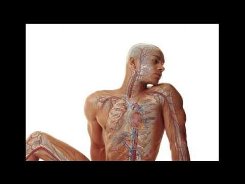 Что будет если бросить курить?  Какие изменения происходят в организме после отказа от курения?
