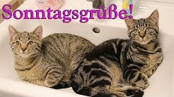 Sonntagsgrüße Katzen Bell und Goldie, schöne Video Grüße zum Sonntag, Lieder von Thomas Koppe
