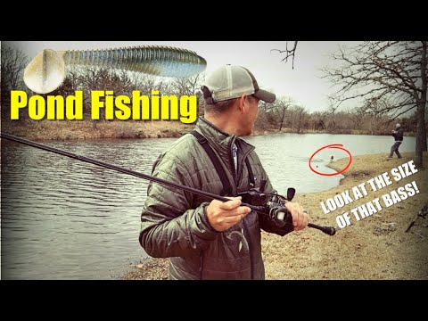 Fishing A Pond For Bass: Strike King Swim Jig And Swimbait