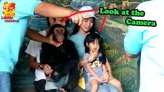 Heyyy .....Chimpanzee  took photo with kid