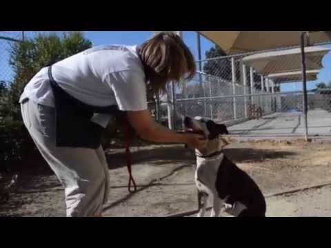 Lucky a sweet vision impaired dog