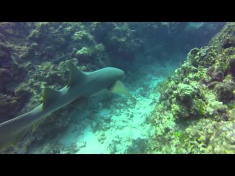 Cayman Islands nurse shark swim