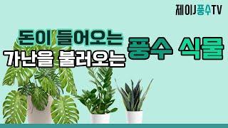 [풍수 인테리어]돈이 들어오는 풍수 식물, 가난을 불러오는 풍수 식물