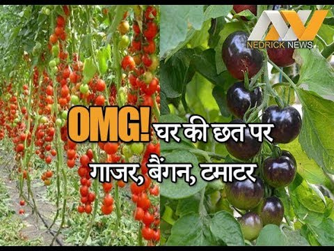 How to Grow Organic Farming on Roof | Rooftop Organic Farming | China