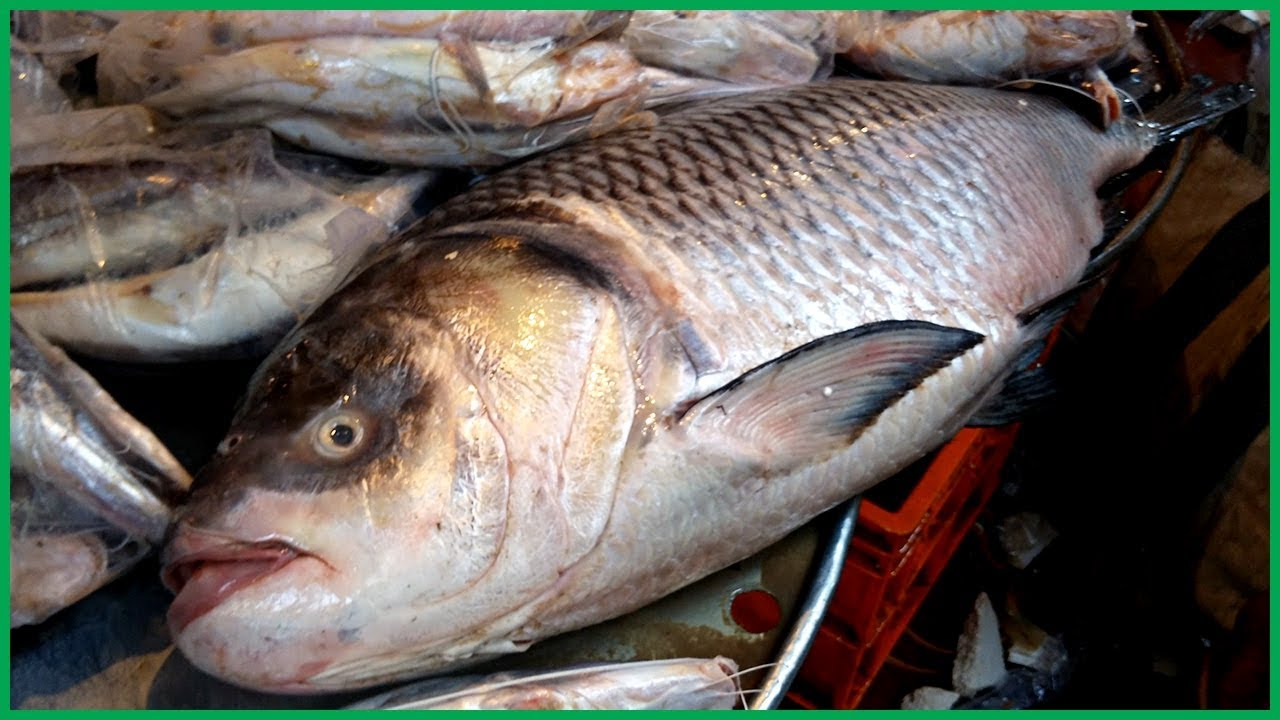 Fastest Rohu Fish Cutting into Pieces in Fish Market